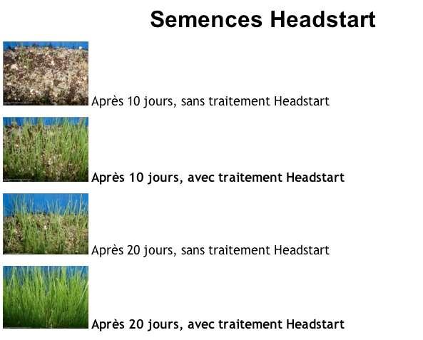 semences headstart