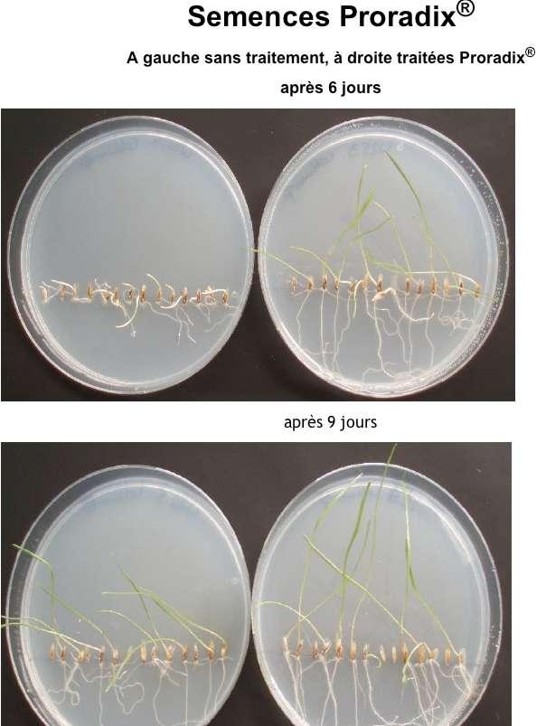 semences proradix