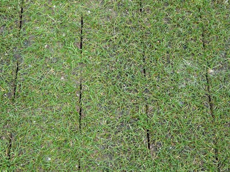 A ration par couteaux a ration de pelouse entretien Pelouse entretien