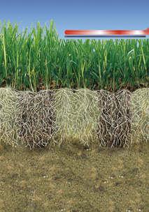 semis de perforation